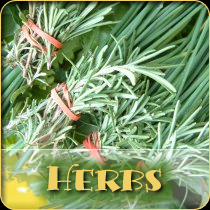 Herbs_Category_Over_210px
