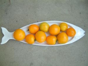 "Tomato - ""Valencia"" (heirloom)"