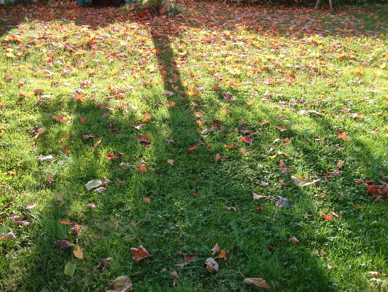 Autumn 2010 Long Shadows 2