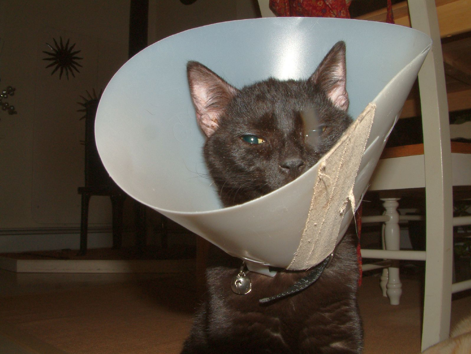 Bodhi in his cone