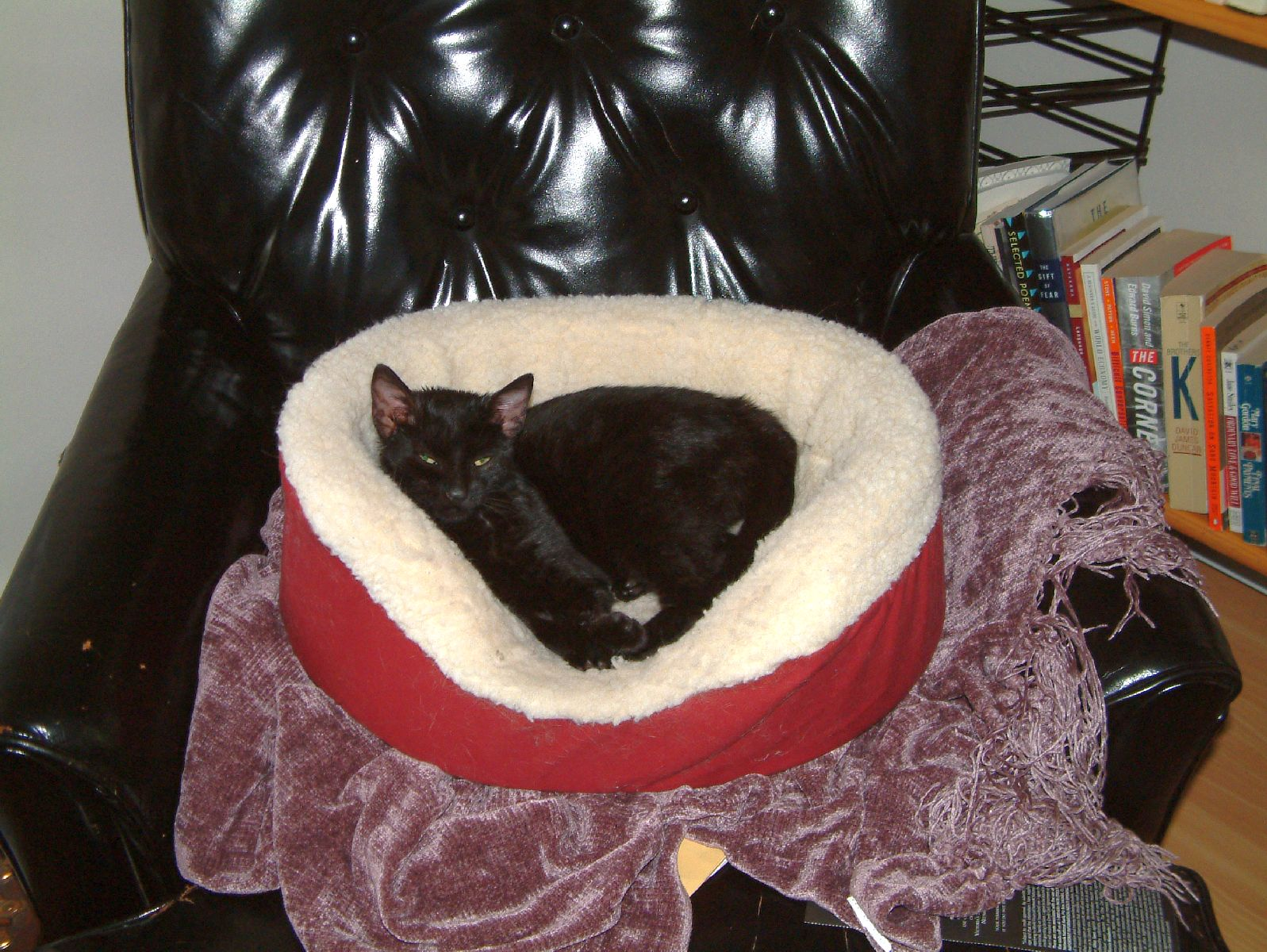 Bodhi in his bed on the black leather chair.