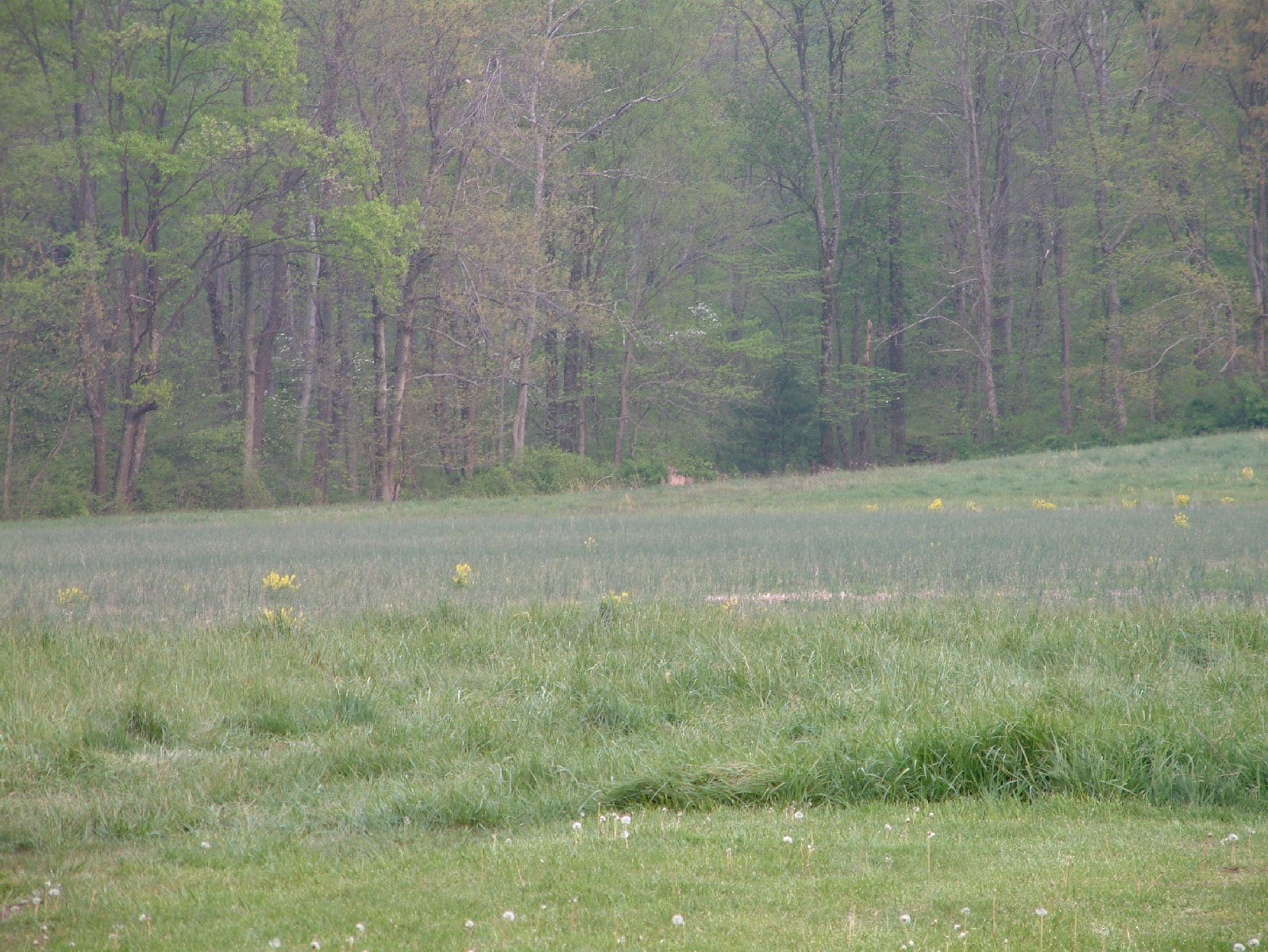 Deer in the distance