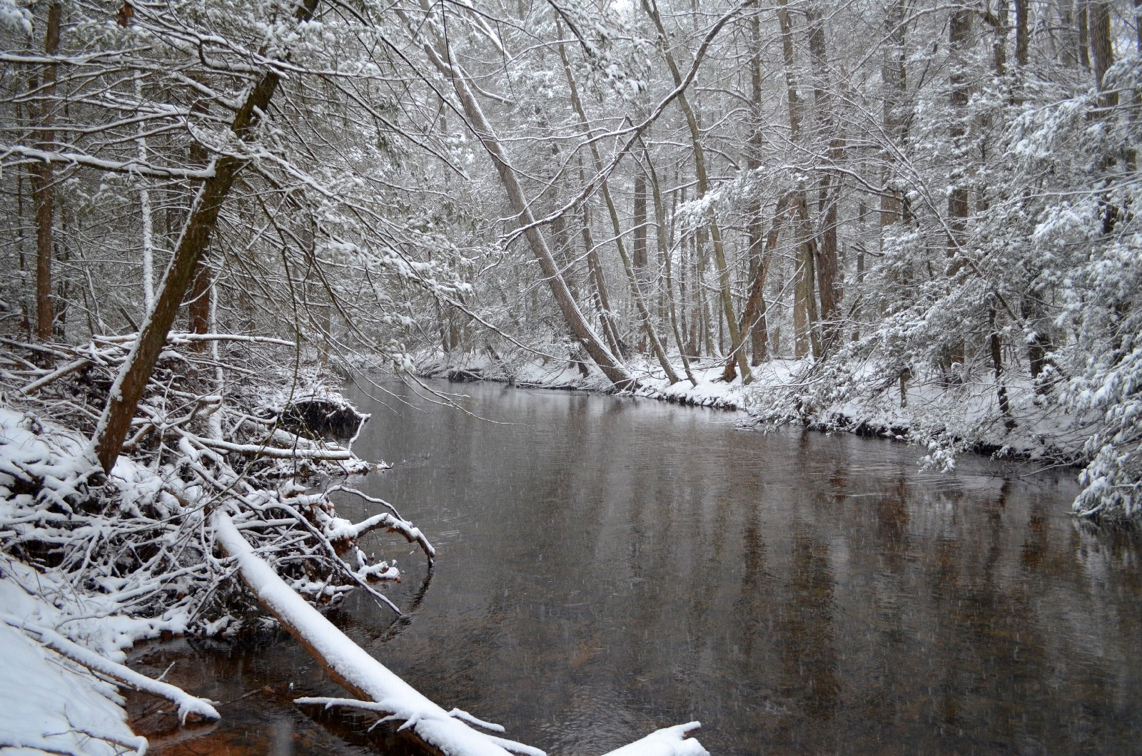 Clarks Creek in the snow