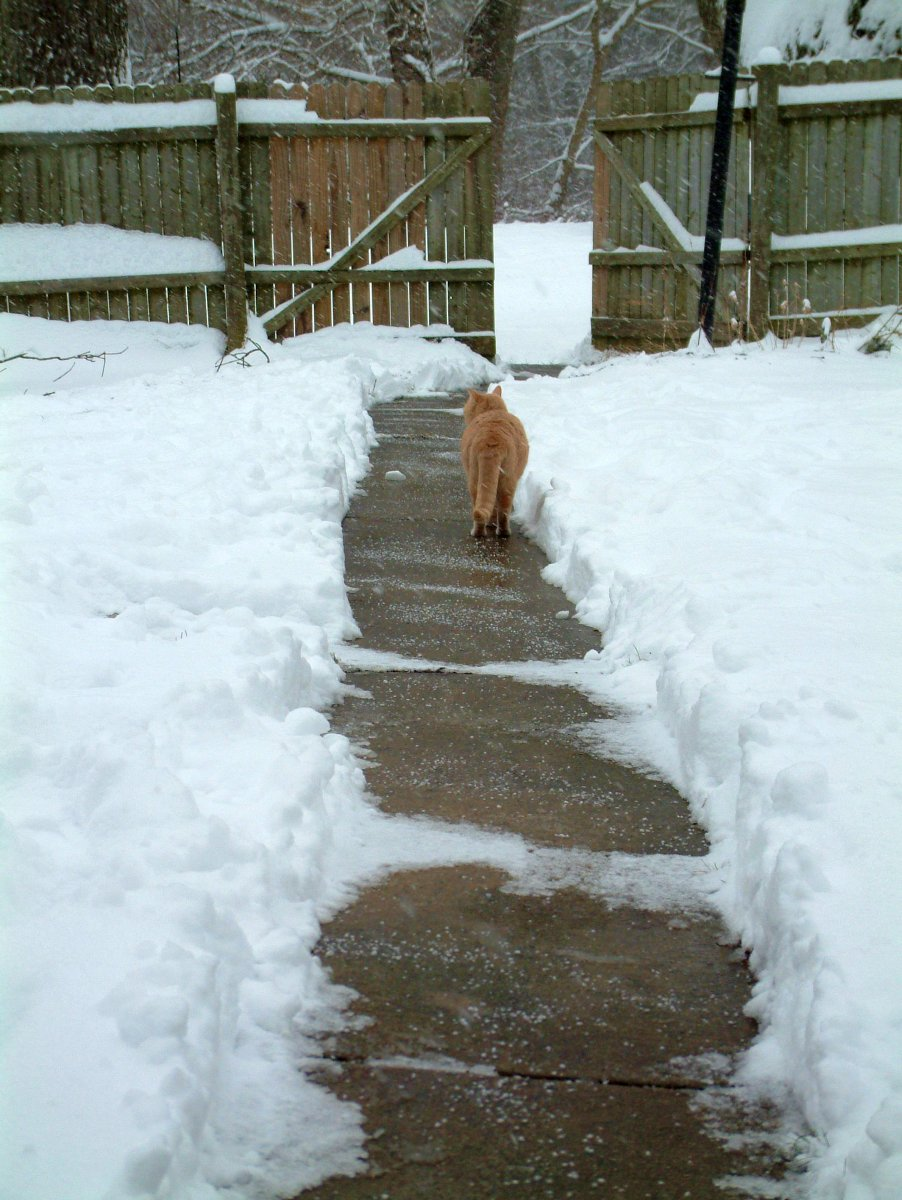 Maggie and the Shoveled Walk