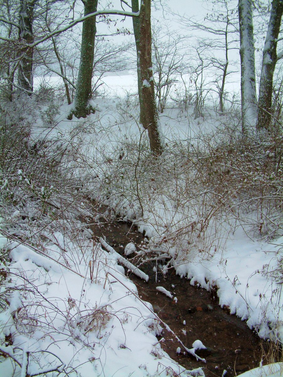 Creek in the snow