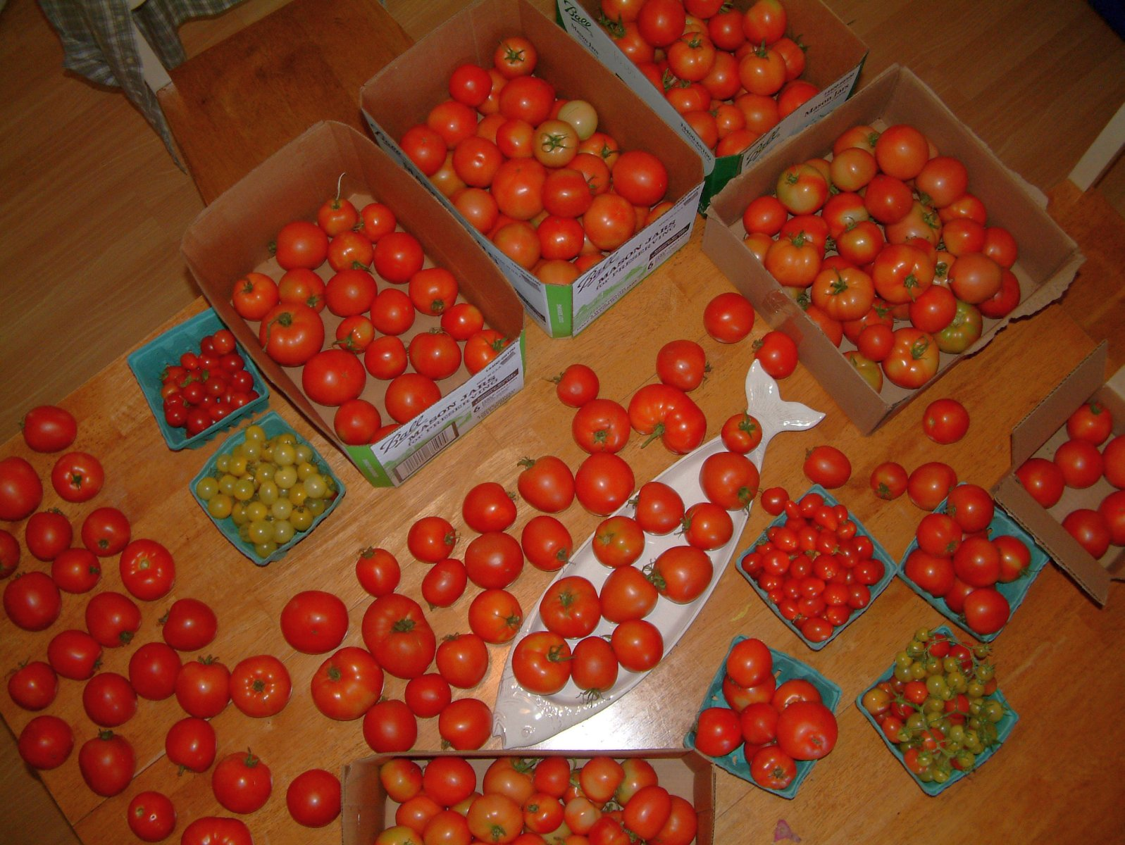 107pounds of tomatoes in 1 week!!
