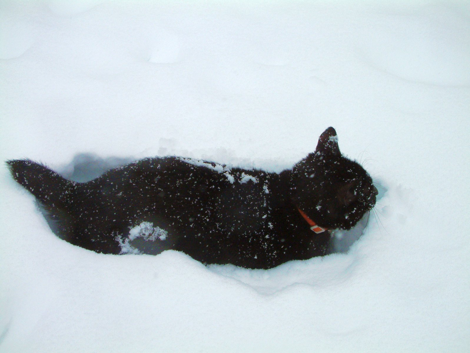 Bodhi in snow