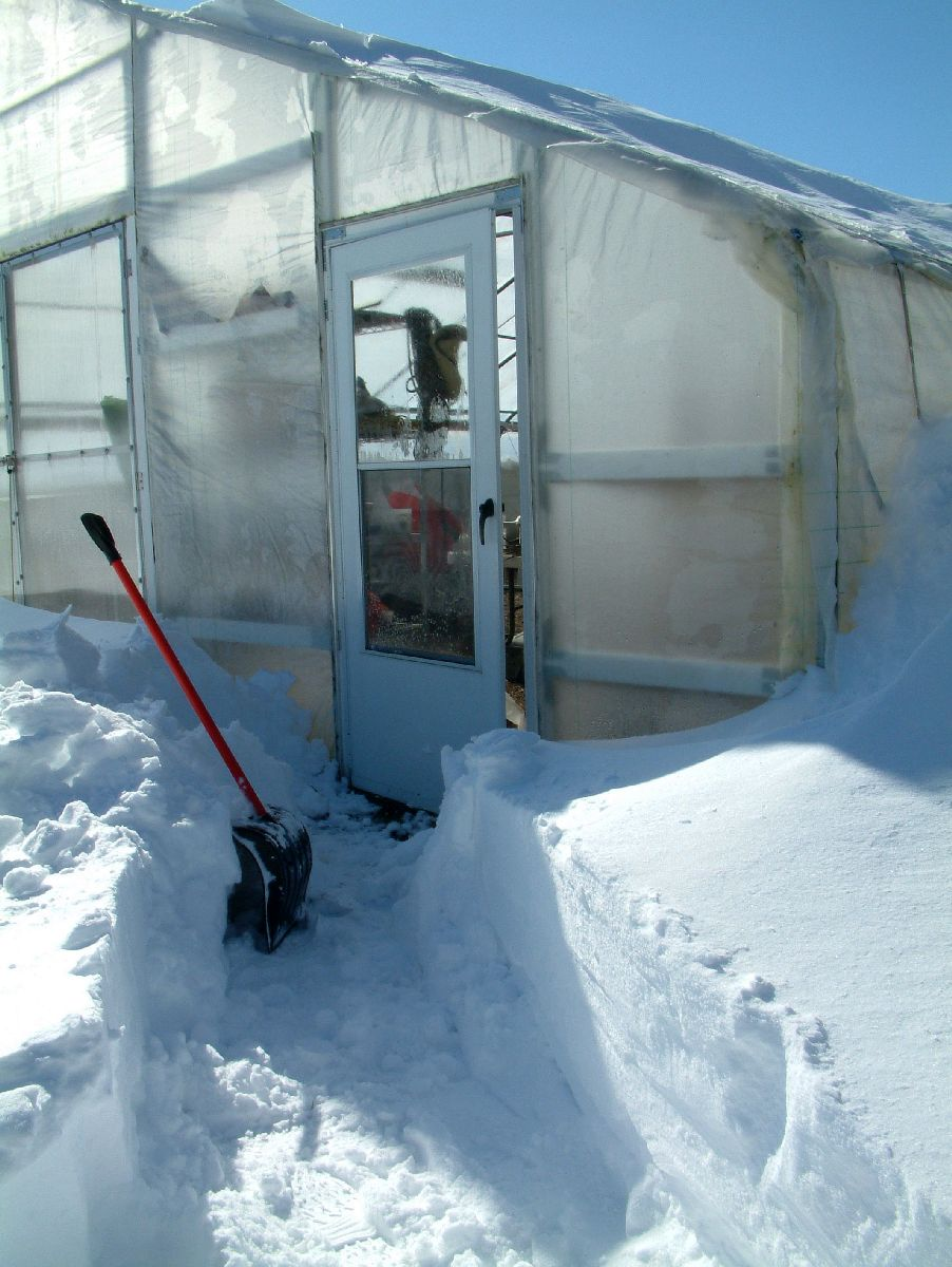 Snow cleared to door of hightunnel - with shovel