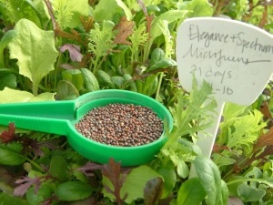 Spicy Micro-Greens Blend